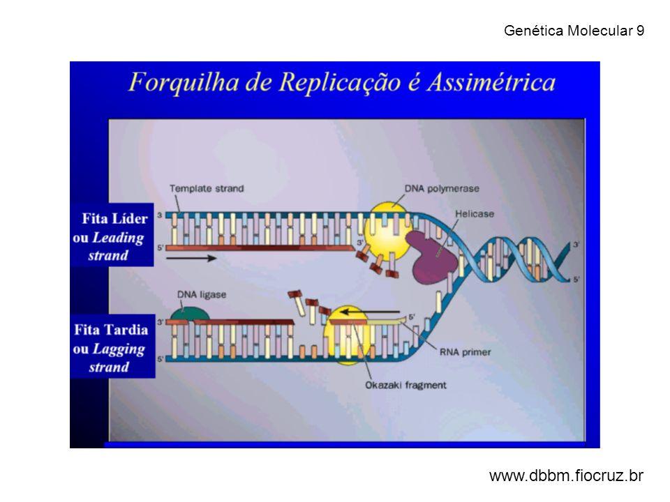 - A duplicação do DNA na interfase formará as cromátides-irmãs que serão separadas na fase de anáfase da mitose ou na fase de anáfase II da meiose.
