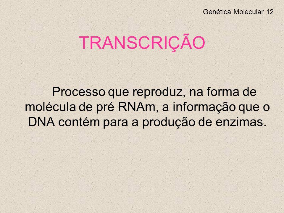 TRANSCRIÇÃO Processo que reproduz, na forma de molécula de pré RNAm, a informação que o DNA contém para a produção de enzimas.