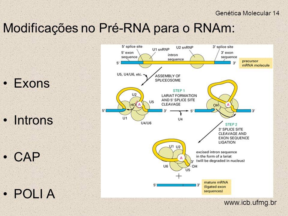 Modificações no Pré-RNA para o RNAm: Exons Introns CAP POLI A Genética Molecular 14 www.icb.ufmg.br