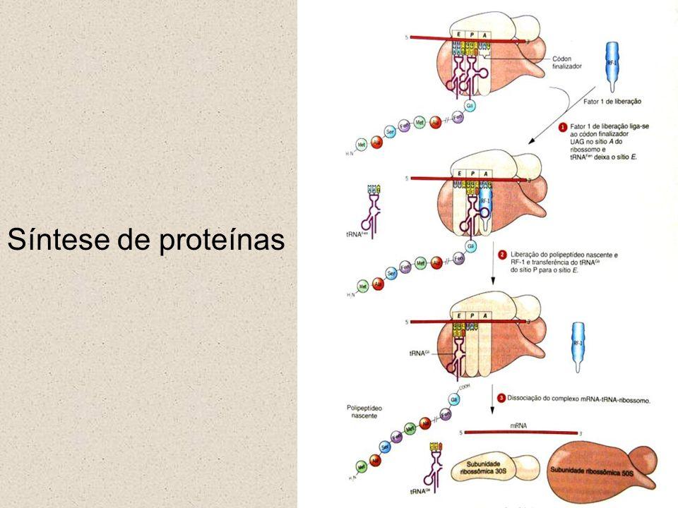 Genética Molecular 14