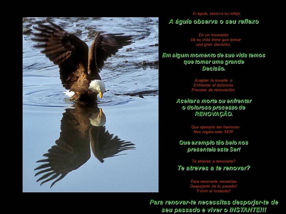 El águila, observa su reflejo A águia observa o seu reflexo En un momento De su vida tiene que tomar una gran decisión.