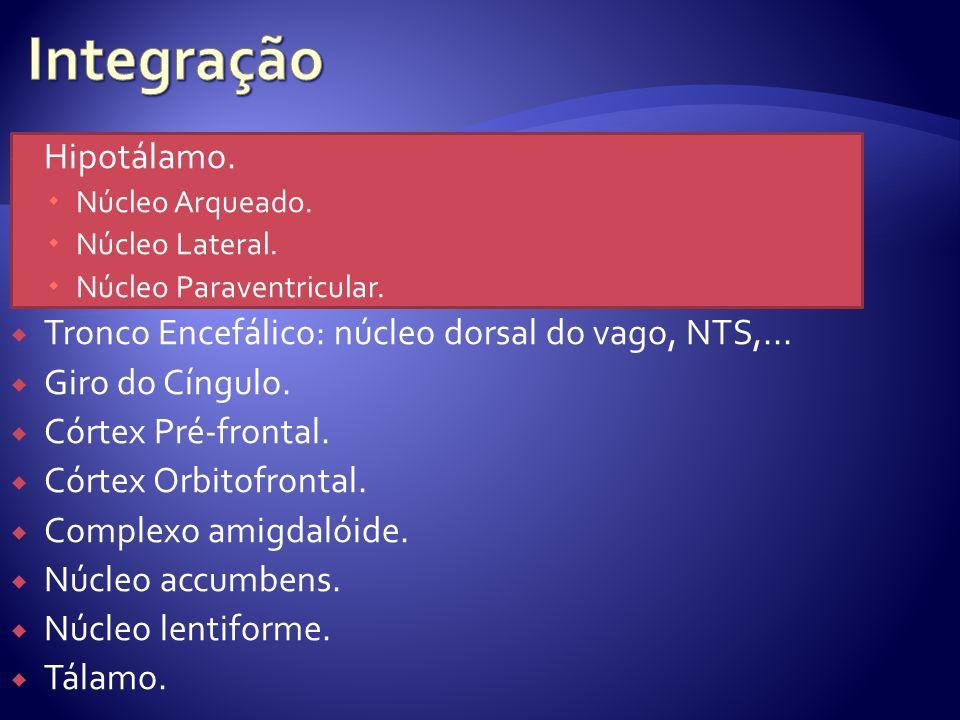 Hipotálamo.Núcleo Arqueado. Núcleo Lateral. Núcleo Paraventricular.