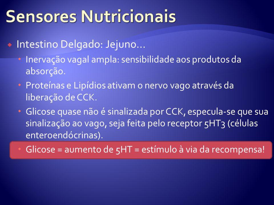 Intestino Delgado: Jejuno... Inervação vagal ampla: sensibilidade aos produtos da absorção. Proteínas e Lipídios ativam o nervo vago através da libera