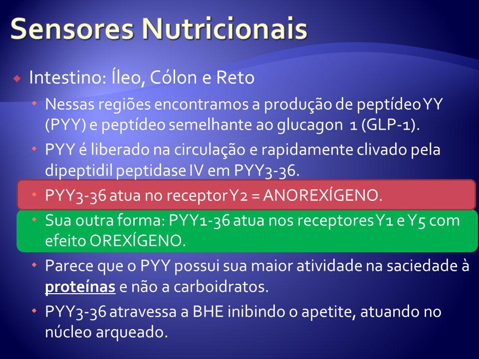 Intestino: Íleo, Cólon e Reto Nessas regiões encontramos a produção de peptídeo YY (PYY) e peptídeo semelhante ao glucagon 1 (GLP-1). PYY é liberado n