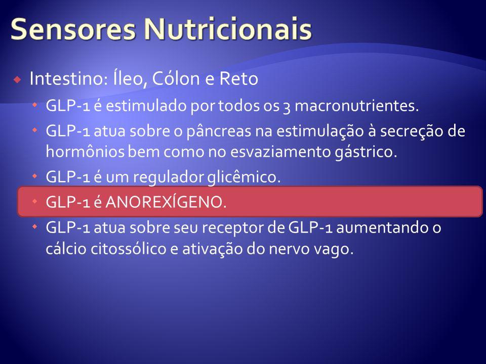 Intestino: Íleo, Cólon e Reto GLP-1 é estimulado por todos os 3 macronutrientes. GLP-1 atua sobre o pâncreas na estimulação à secreção de hormônios be
