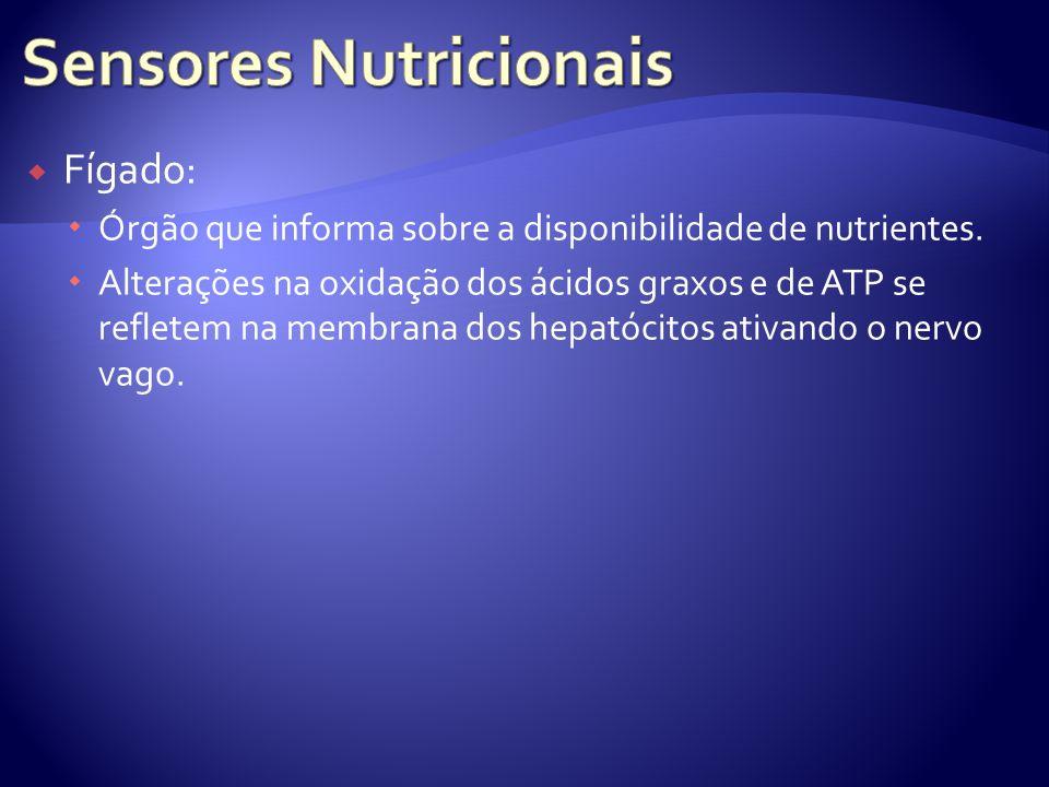 Fígado: Órgão que informa sobre a disponibilidade de nutrientes. Alterações na oxidação dos ácidos graxos e de ATP se refletem na membrana dos hepatóc