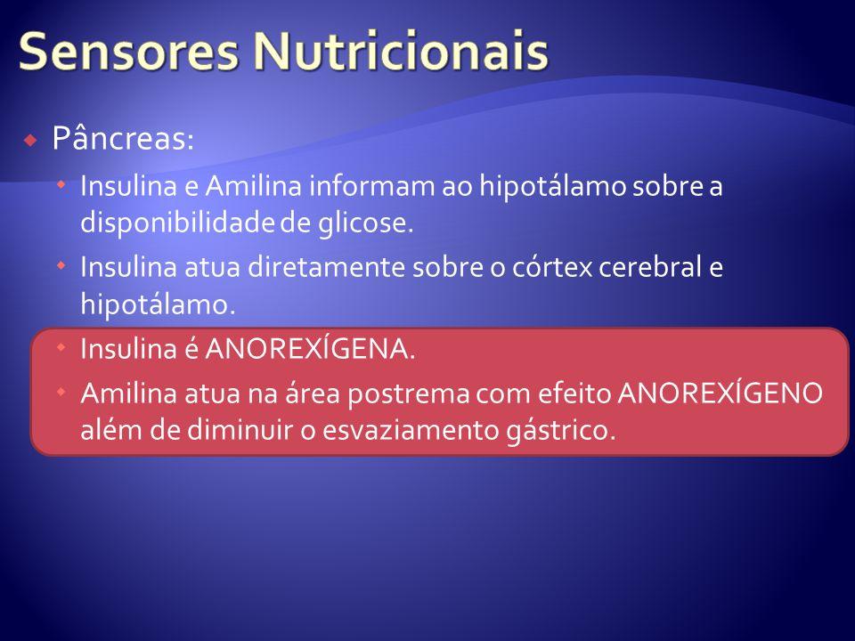 Pâncreas: Insulina e Amilina informam ao hipotálamo sobre a disponibilidade de glicose. Insulina atua diretamente sobre o córtex cerebral e hipotálamo