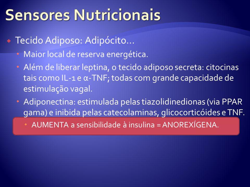 Tecido Adiposo: Adipócito... Maior local de reserva energética. Além de liberar leptina, o tecido adiposo secreta: citocinas tais como IL-1 e α-TNF; t
