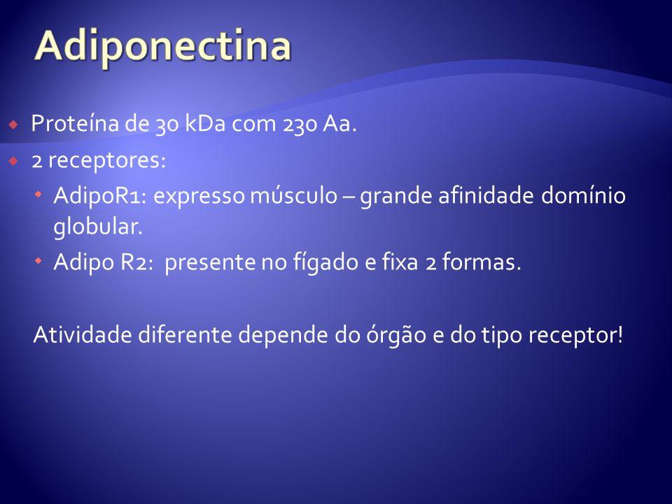 Proteína de 30 kDa com 230 Aa.