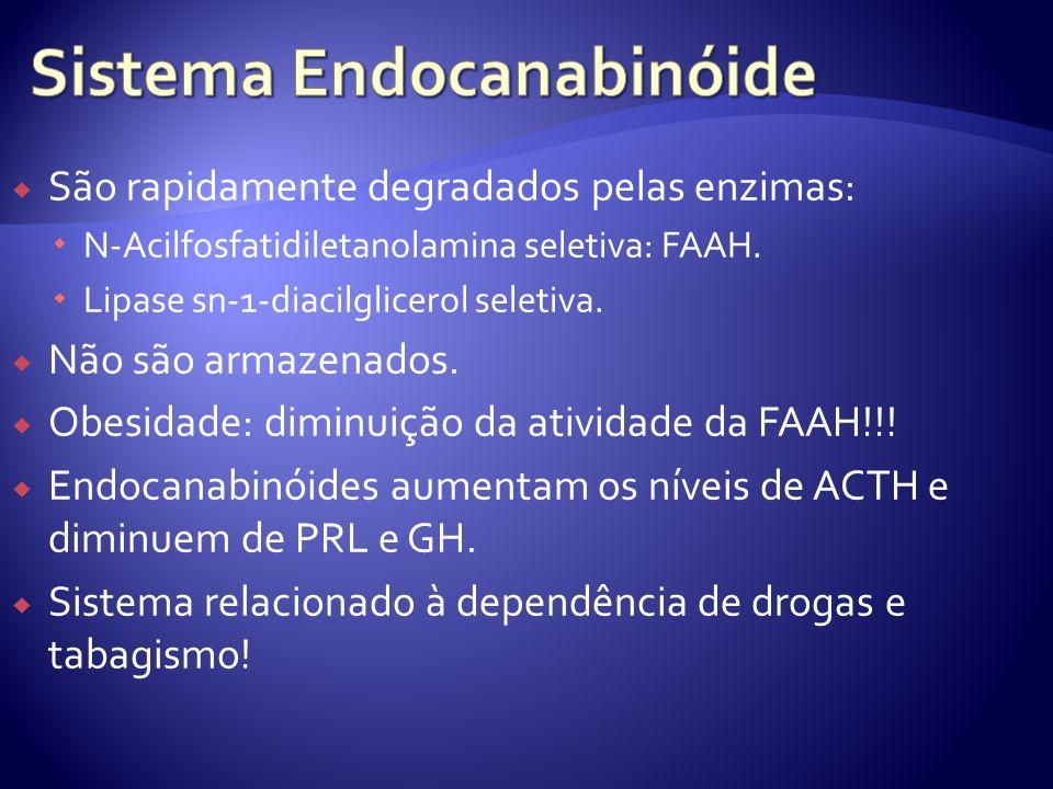 São rapidamente degradados pelas enzimas: N-Acilfosfatidiletanolamina seletiva: FAAH. Lipase sn-1-diacilglicerol seletiva. Não são armazenados. Obesid