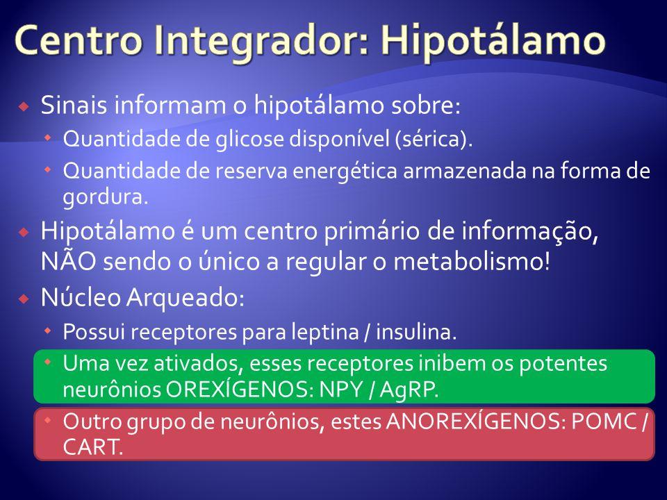 Sinais informam o hipotálamo sobre: Quantidade de glicose disponível (sérica). Quantidade de reserva energética armazenada na forma de gordura. Hipotá