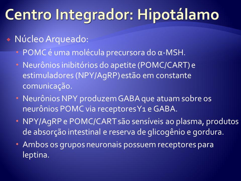 Núcleo Arqueado: POMC é uma molécula precursora do α-MSH. Neurônios inibitórios do apetite (POMC/CART) e estimuladores (NPY/AgRP) estão em constante c