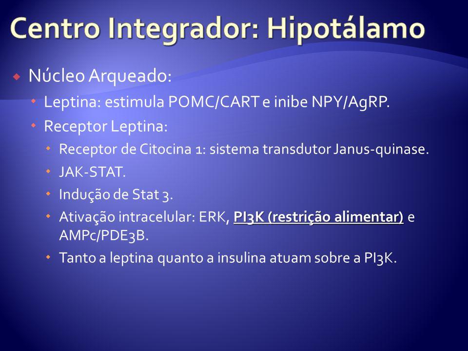 Núcleo Arqueado: Leptina: estimula POMC/CART e inibe NPY/AgRP. Receptor Leptina: Receptor de Citocina 1: sistema transdutor Janus-quinase. JAK-STAT. I