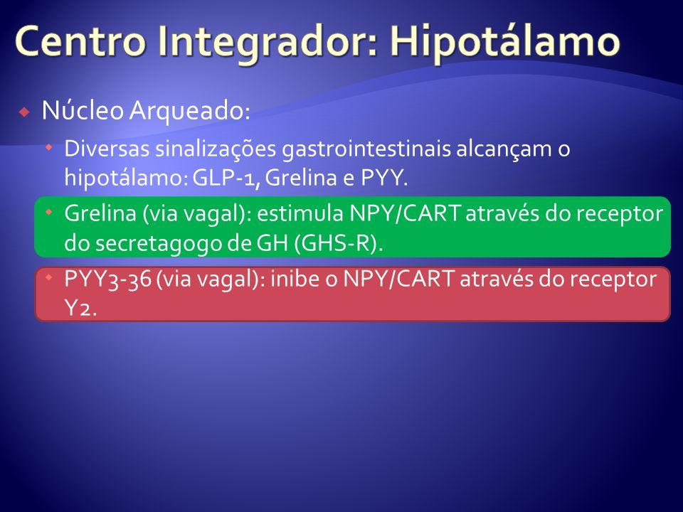 Núcleo Arqueado: Diversas sinalizações gastrointestinais alcançam o hipotálamo: GLP-1, Grelina e PYY. Grelina (via vagal): estimula NPY/CART através d
