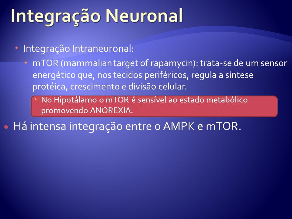 Integração Intraneuronal: mTOR (mammalian target of rapamycin): trata-se de um sensor energético que, nos tecidos periféricos, regula a síntese protéi