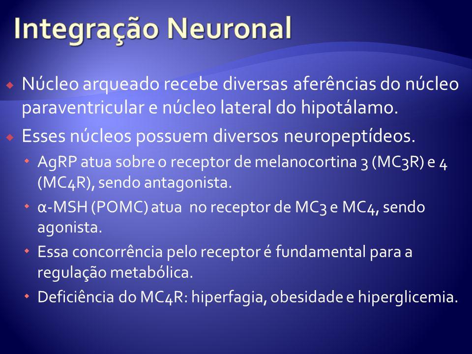 Núcleo arqueado recebe diversas aferências do núcleo paraventricular e núcleo lateral do hipotálamo. Esses núcleos possuem diversos neuropeptídeos. Ag