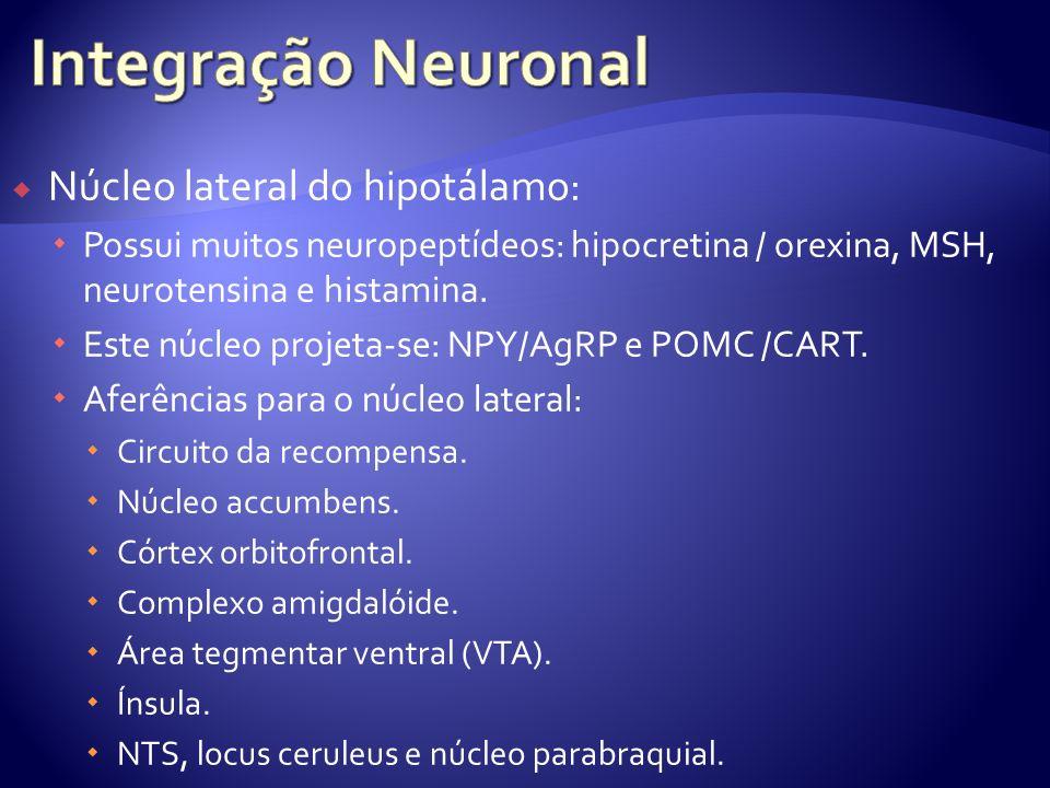 Núcleo lateral do hipotálamo: Possui muitos neuropeptídeos: hipocretina / orexina, MSH, neurotensina e histamina. Este núcleo projeta-se: NPY/AgRP e P