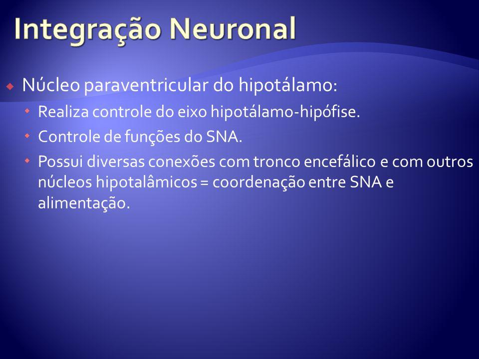 Núcleo paraventricular do hipotálamo: Realiza controle do eixo hipotálamo-hipófise. Controle de funções do SNA. Possui diversas conexões com tronco en