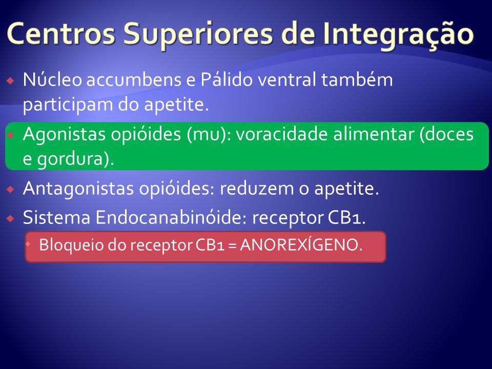Núcleo accumbens e Pálido ventral também participam do apetite. Agonistas opióides (mu): voracidade alimentar (doces e gordura). Antagonistas opióides