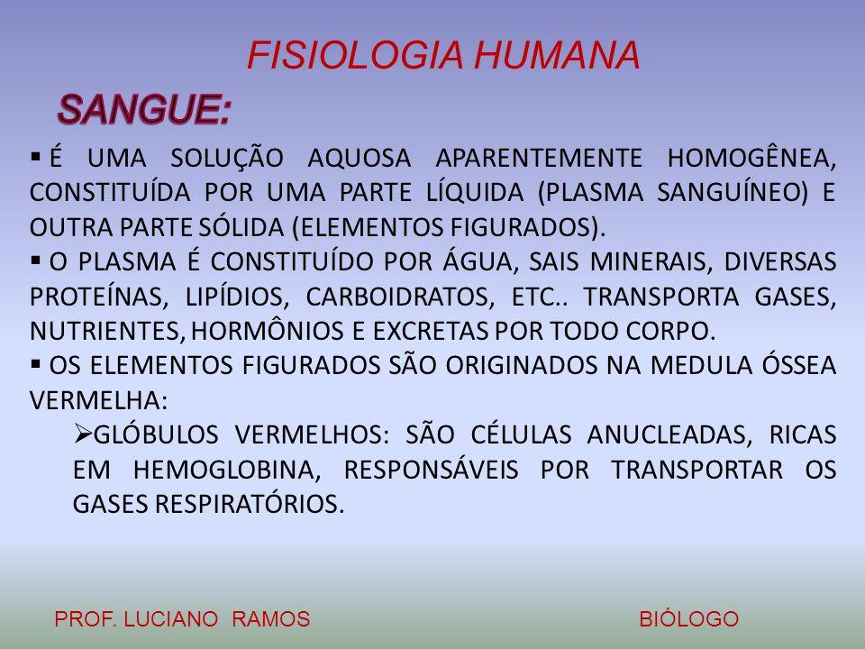 FISIOLOGIA HUMANA PROF. LUCIANO RAMOSBIÓLOGO É UMA SOLUÇÃO AQUOSA APARENTEMENTE HOMOGÊNEA, CONSTITUÍDA POR UMA PARTE LÍQUIDA (PLASMA SANGUÍNEO) E OUTR