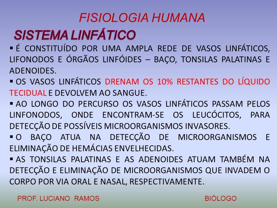 FISIOLOGIA HUMANA PROF. LUCIANO RAMOSBIÓLOGO É CONSTITUÍDO POR UMA AMPLA REDE DE VASOS LINFÁTICOS, LIFONODOS E ÓRGÃOS LINFÓIDES – BAÇO, TONSILAS PALAT
