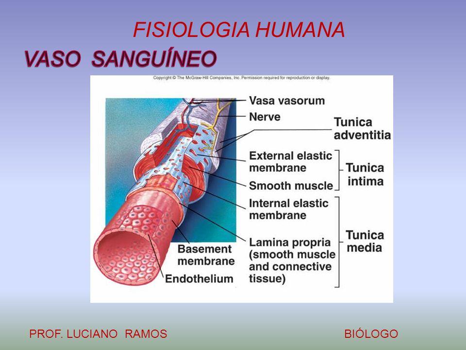 FISIOLOGIA HUMANA PROF. LUCIANO RAMOSBIÓLOGO