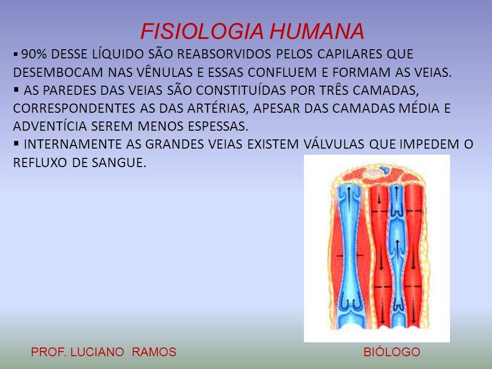 FISIOLOGIA HUMANA PROF. LUCIANO RAMOSBIÓLOGO 90% DESSE LÍQUIDO SÃO REABSORVIDOS PELOS CAPILARES QUE DESEMBOCAM NAS VÊNULAS E ESSAS CONFLUEM E FORMAM A