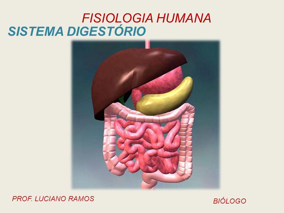 FISIOLOGIA HUMANA PROF. LUCIANO RAMOS BIÓLOGO SISTEMA DIGESTÓRIO