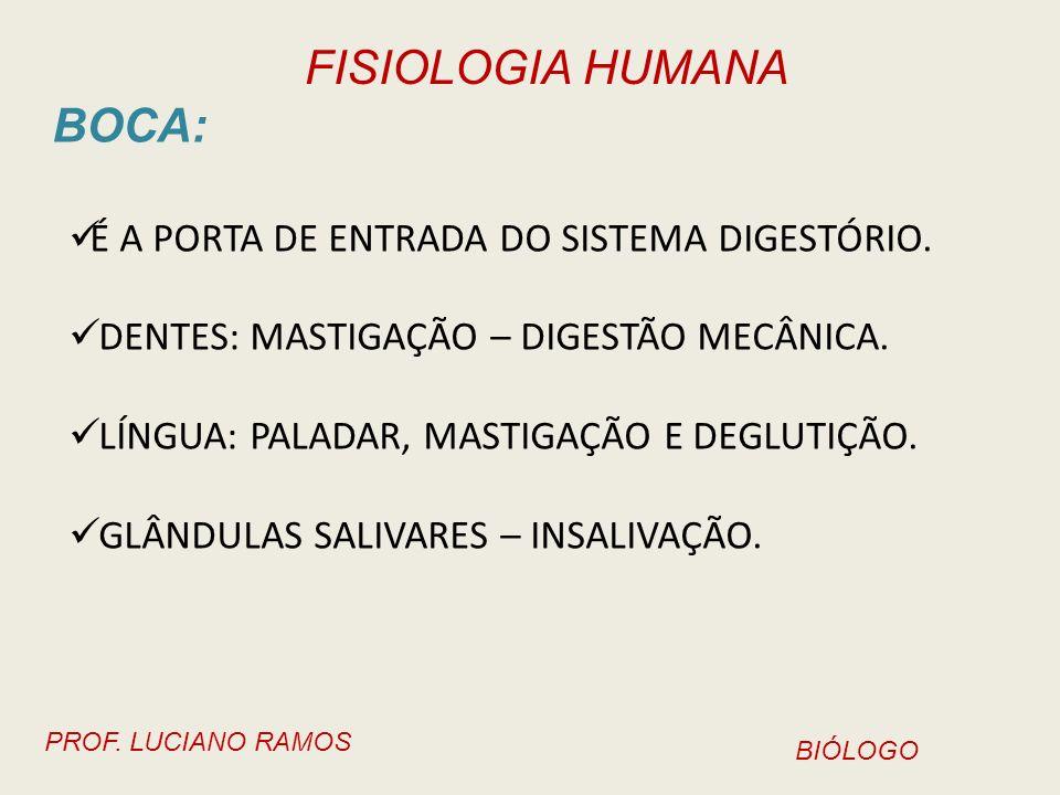 FISIOLOGIA HUMANA PROF. LUCIANO RAMOS BIÓLOGO ESÔFAGO E ESTÔMAGO