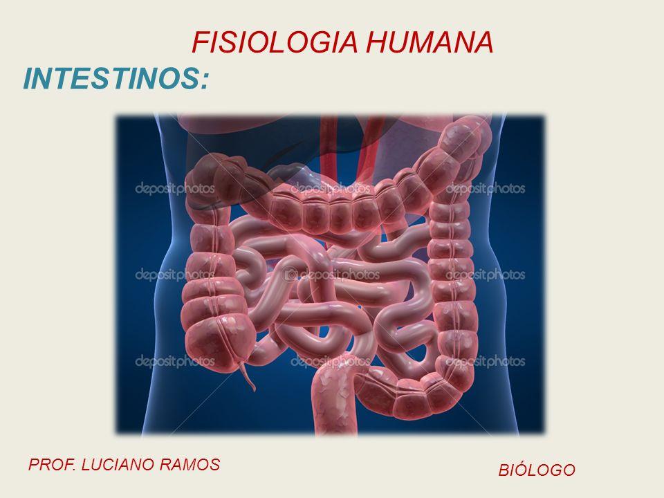 FISIOLOGIA HUMANA PROF. LUCIANO RAMOS BIÓLOGO INTESTINOS: