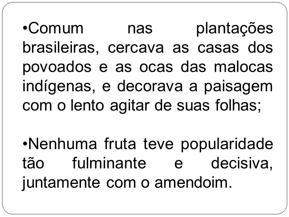 Comum nas plantações brasileiras, cercava as casas dos povoados e as ocas das malocas indígenas, e decorava a paisagem com o lento agitar de suas folh