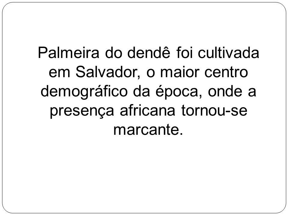 Palmeira do dendê foi cultivada em Salvador, o maior centro demográfico da época, onde a presença africana tornou-se marcante.