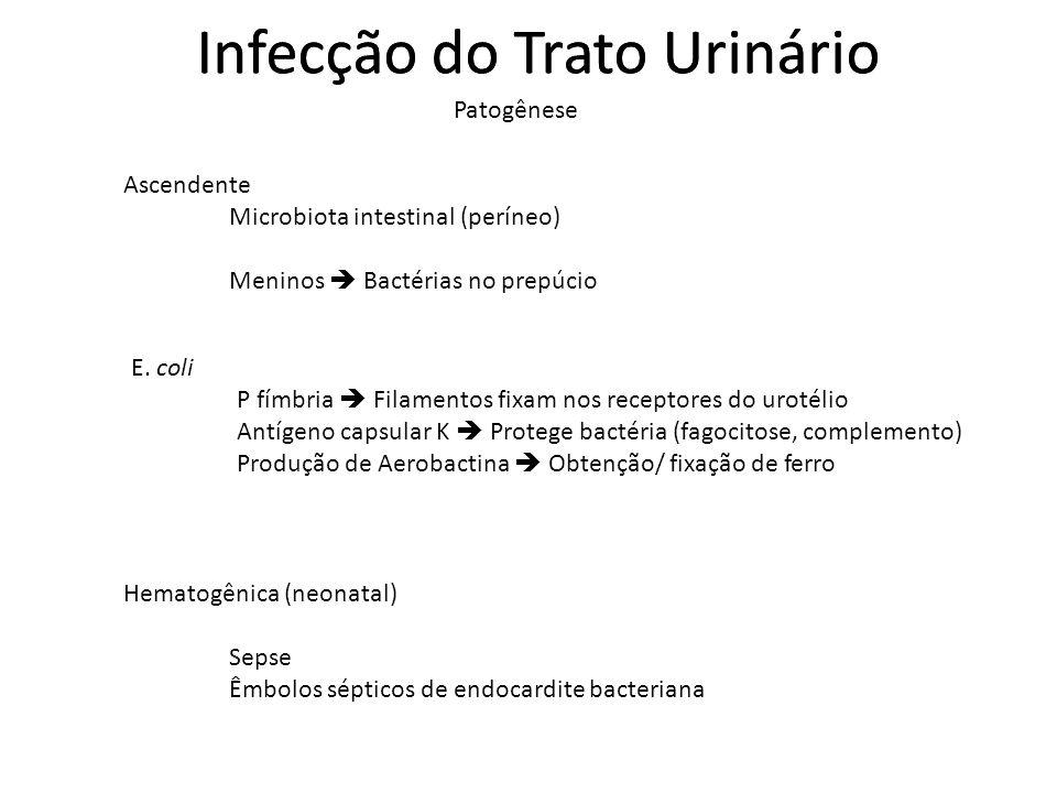 Infecção do Trato Urinário Ascendente Microbiota intestinal (períneo) Meninos Bactérias no prepúcio Patogênese E. coli P fímbria Filamentos fixam nos