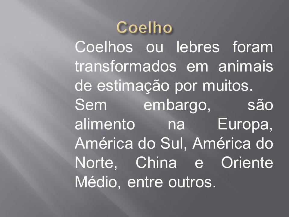 Coelhos ou lebres foram transformados em animais de estimação por muitos. Sem embargo, são alimento na Europa, América do Sul, América do Norte, China