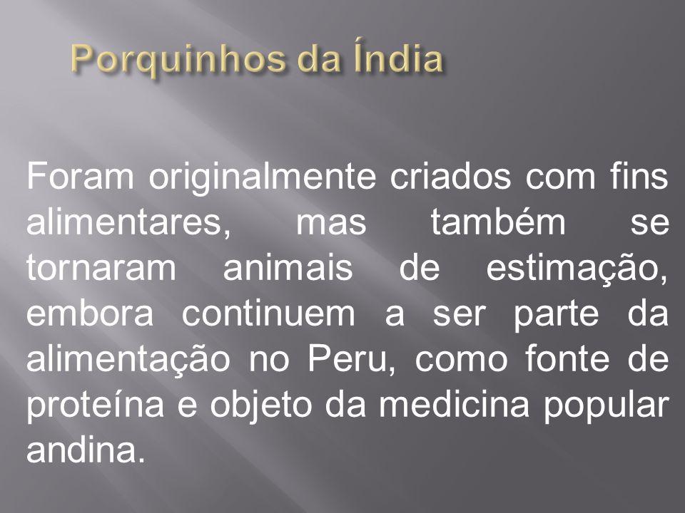 Foram originalmente criados com fins alimentares, mas também se tornaram animais de estimação, embora continuem a ser parte da alimentação no Peru, co