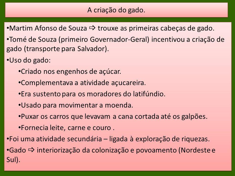 Martim Afonso de Souza trouxe as primeiras cabeças de gado. Tomé de Souza (primeiro Governador-Geral) incentivou a criação de gado (transporte para Sa