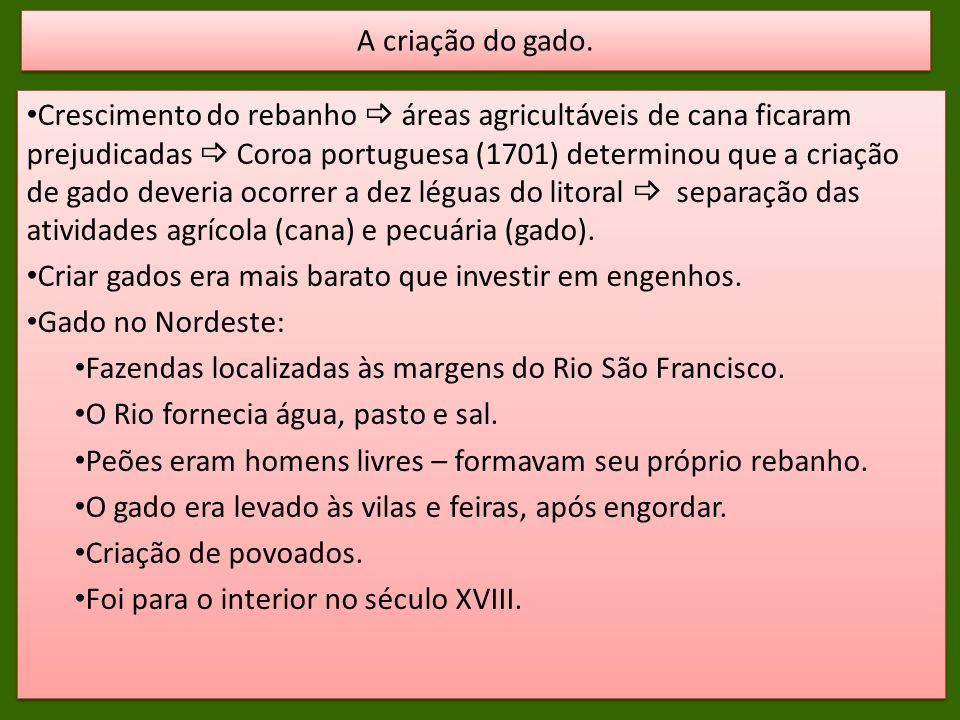 Crescimento do rebanho áreas agricultáveis de cana ficaram prejudicadas Coroa portuguesa (1701) determinou que a criação de gado deveria ocorrer a dez