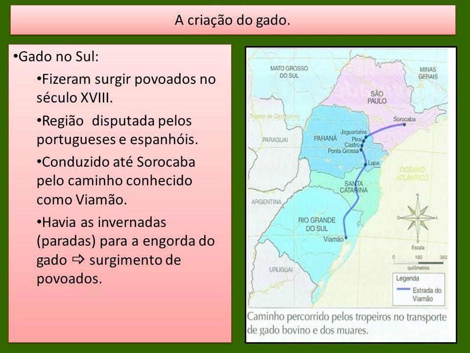 Gado no Sul: Fizeram surgir povoados no século XVIII. Região disputada pelos portugueses e espanhóis. Conduzido até Sorocaba pelo caminho conhecido co