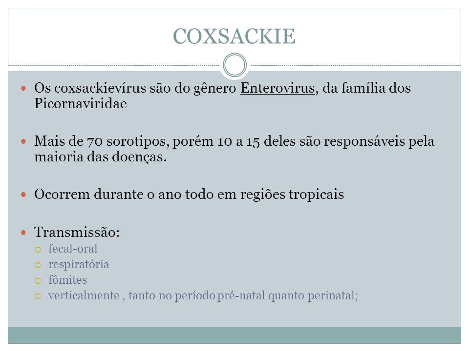 COXSACKIE Os coxsackievírus são do gênero Enterovirus, da família dos Picornaviridae Mais de 70 sorotipos, porém 10 a 15 deles são responsáveis pela m