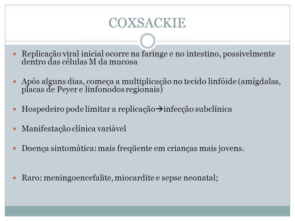COXSACKIE Replicação viral inicial ocorre na faringe e no intestino, possivelmente dentro das células M da mucosa Após alguns dias, começa a multiplic