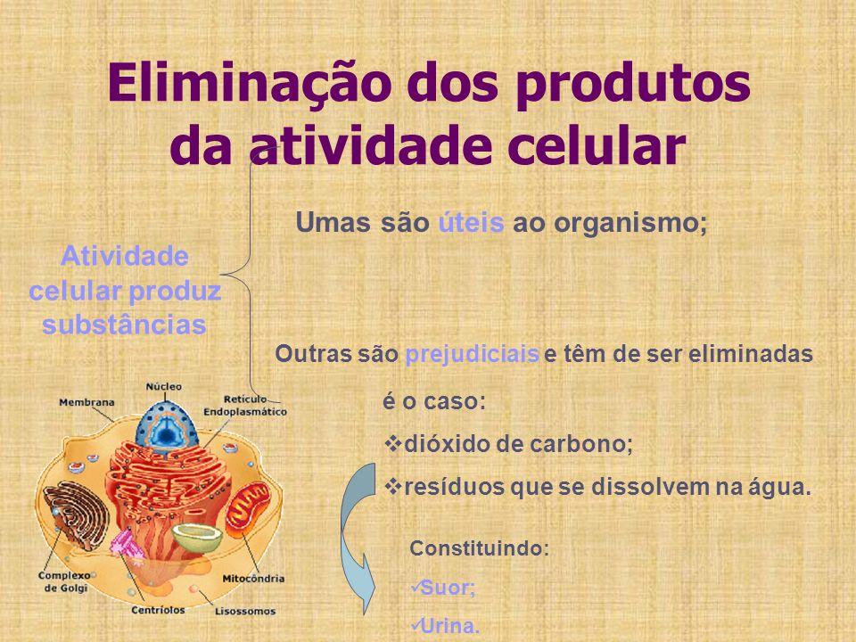 Eliminação dos produtos da atividade celular Atividade celular produz substâncias Umas são úteis ao organismo; Outras são prejudiciais e têm de ser el