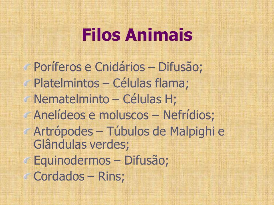 Filos Animais Poríferos e Cnidários – Difusão; Platelmintos – Células flama; Nematelminto – Células H; Anelídeos e moluscos – Nefrídios; Artrópodes –