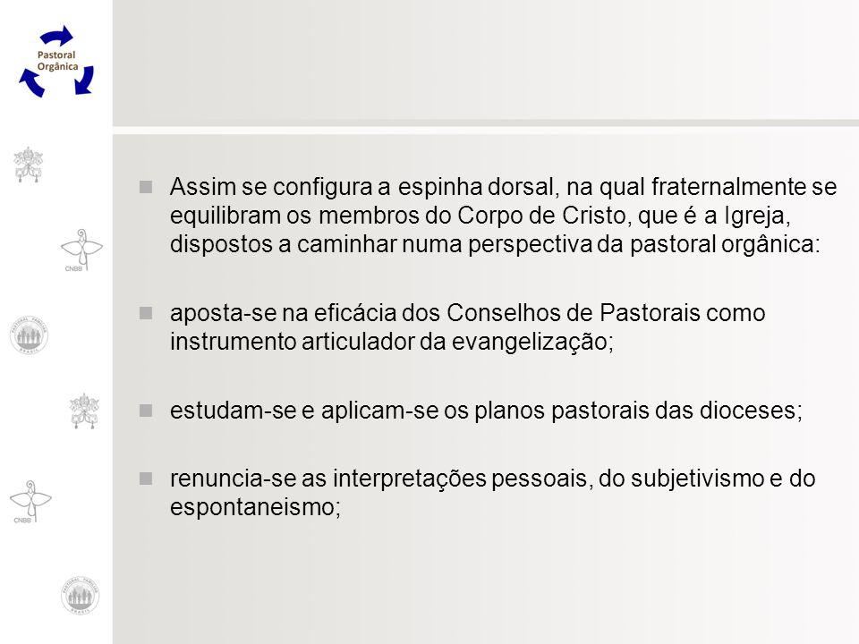 Assim se configura a espinha dorsal, na qual fraternalmente se equilibram os membros do Corpo de Cristo, que é a Igreja, dispostos a caminhar numa per
