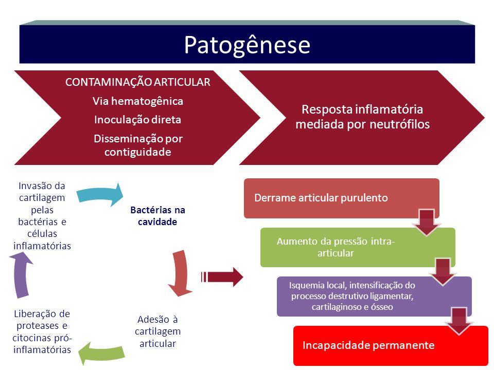 CONTAMINAÇÃO ARTICULAR Via hematogênica Inoculação direta Disseminação por contiguidade Resposta inflamatória mediada por neutrófilos Patogênese Bacté