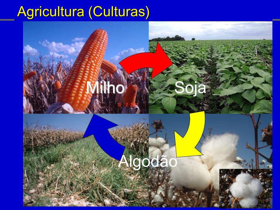 Agricultura (Culturas) Soja Algodão Milho