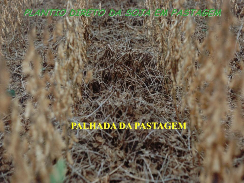 PLANTIO DIRETO DA SOJA EM PASTAGEM PALHADA DA PASTAGEM