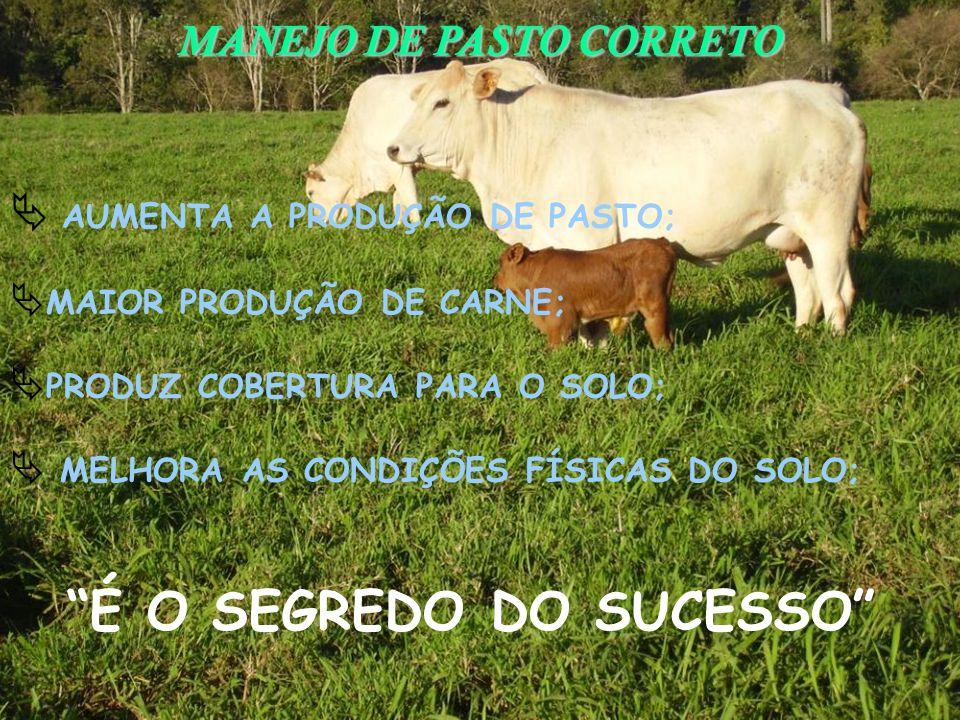É O SEGREDO DO SUCESSO MANEJO DE PASTO CORRETO AUMENTA A PRODUÇÃO DE PASTO; MAIOR PRODUÇÃO DE CARNE; PRODUZ COBERTURA PARA O SOLO; MELHORA AS CONDIÇÕE
