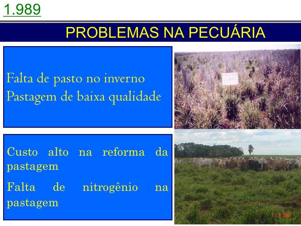 Falta de pasto no inverno Pastagem de baixa qualidade Custo alto na reforma da pastagem Falta de nitrogênio na pastagem PROBLEMAS NA PECUÁRIA