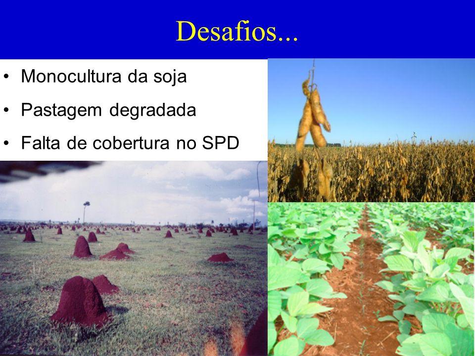 BENEFÍCIOS DA AGRICULTURA PARA A PECUÁRIA Fornecimento de nutrientes para pastagem; Produção de forragem na seca; Facilita a troca de espécie forrageira; Custo baixo na reforma de pastagem; Retorno mais rápido do capital investido.