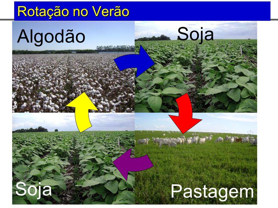 AnosVerãoInverno 1 0 AnoSoja Milho Safrinha ou Aveia 2 0 AnoSojaMilheto+Pasto 3 0 AnoPasto 1.993 INICIO DA INTEGRAÇÃO COMO ROTAÇÃO Faz.